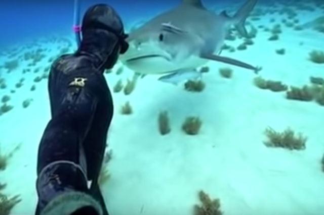 shark-kisses.jpg