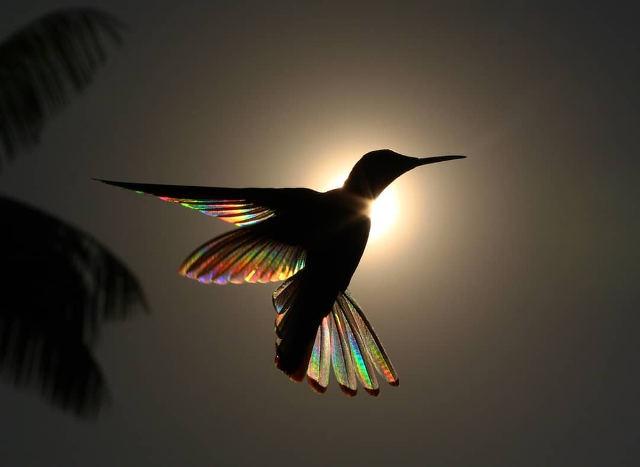 hummingbird-wing-prisms-1.jpg