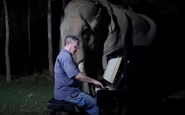 piano-for-elephants.jpg