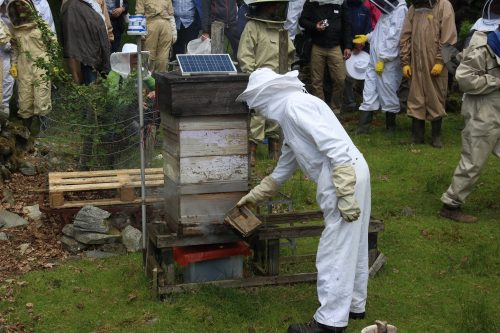Spectators in protective suits watching staff monitor the beehive