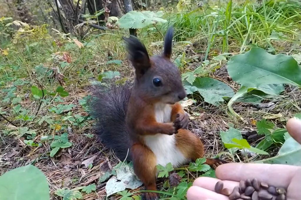 squirrel-reboot.jpg