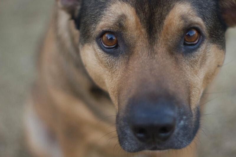 Close up of a dog's face.