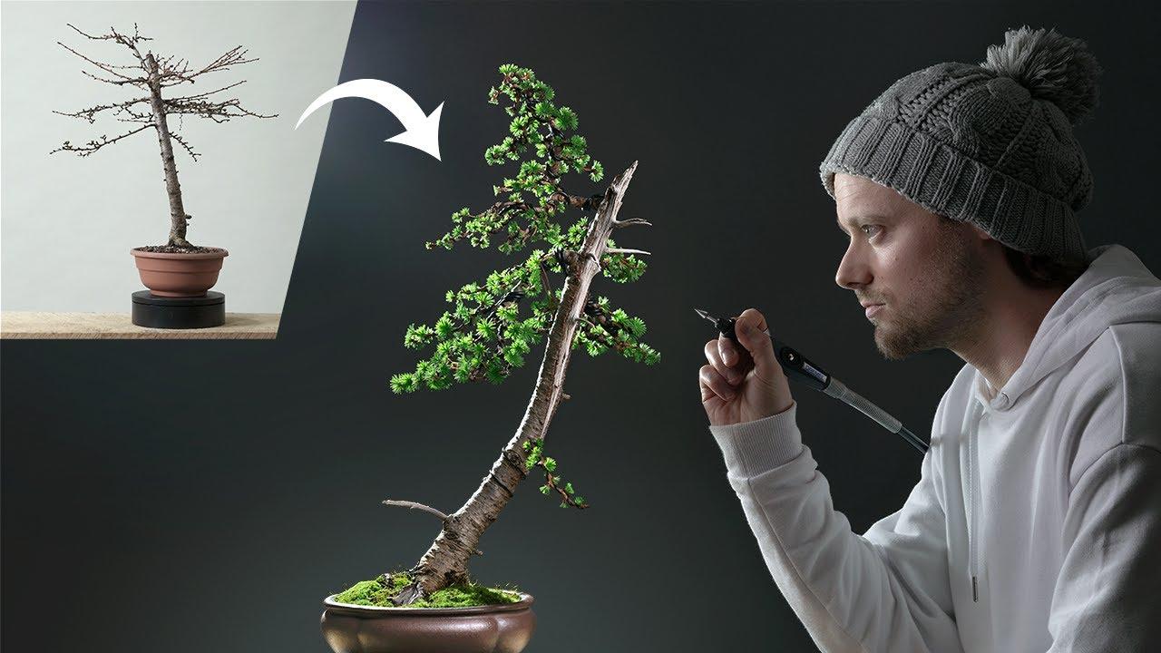 japanese-larch-bonsai.jpg