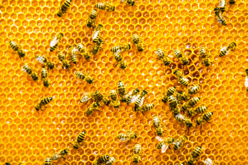 Mergers, twists, and pentagons: the architecture of honeycombs