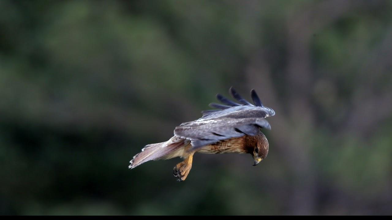 hawk-head-stabilization.jpg