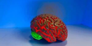 human brain human physiology medical mind